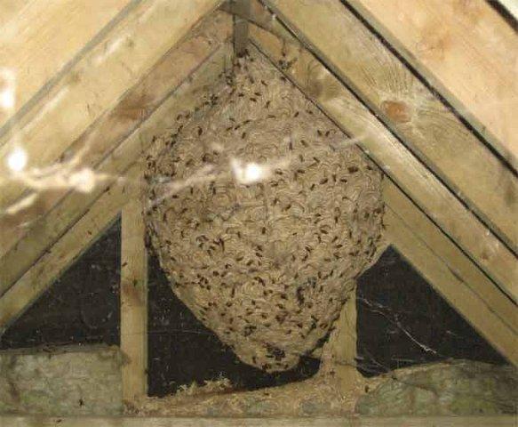Lafayette Wasp Extermination